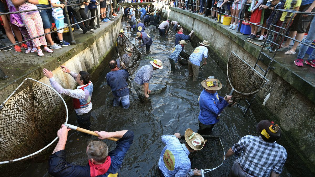"""Beim historischen Fischertag in Memmingen stürzen sich die Männer mit einem Kescher zum Forellenfang in die """"Memminger Ach"""""""