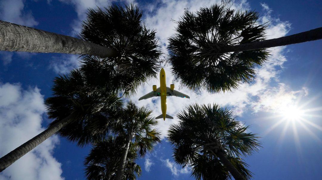 Flugzeug über Palmen