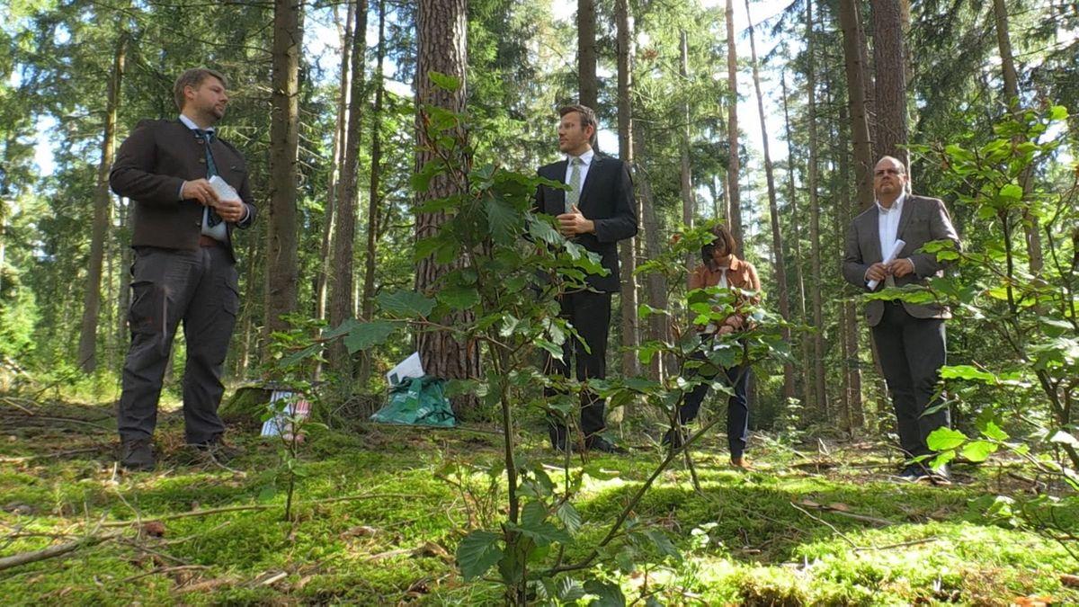 Ein Baum für jedes Baby - Nürnbergs Antwort auf den Klimawandel