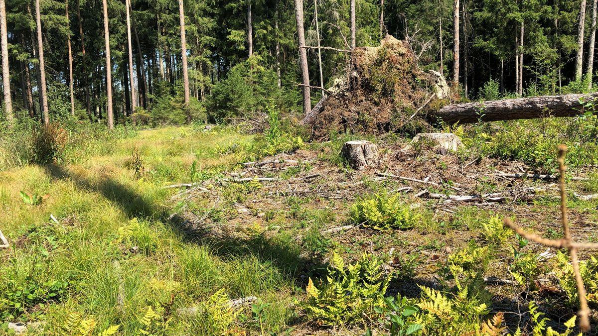Das Forstministerium stellt 2020 insgesamt 80 Millionen Euro für Privatwaldbesitzer und Kommunen bereit.
