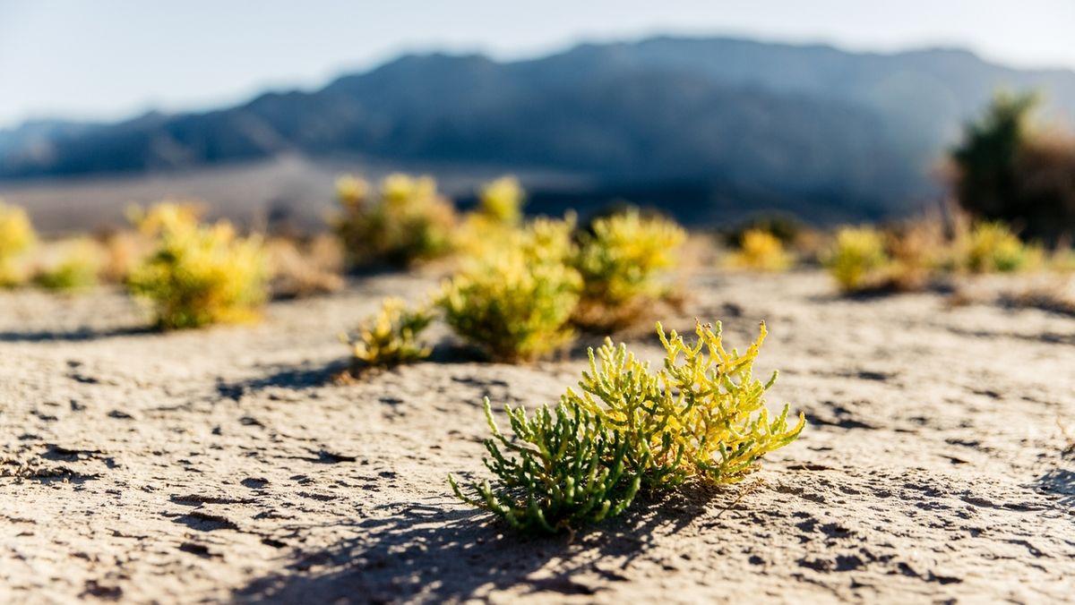 Wüstenlandschaften wie diese im Death Valley National Park in Kalifornien könnten durch den Klimawandel und die Erderwärmung zunehmen. Die Landnutzung für Landwirtschaft wird problematischer.
