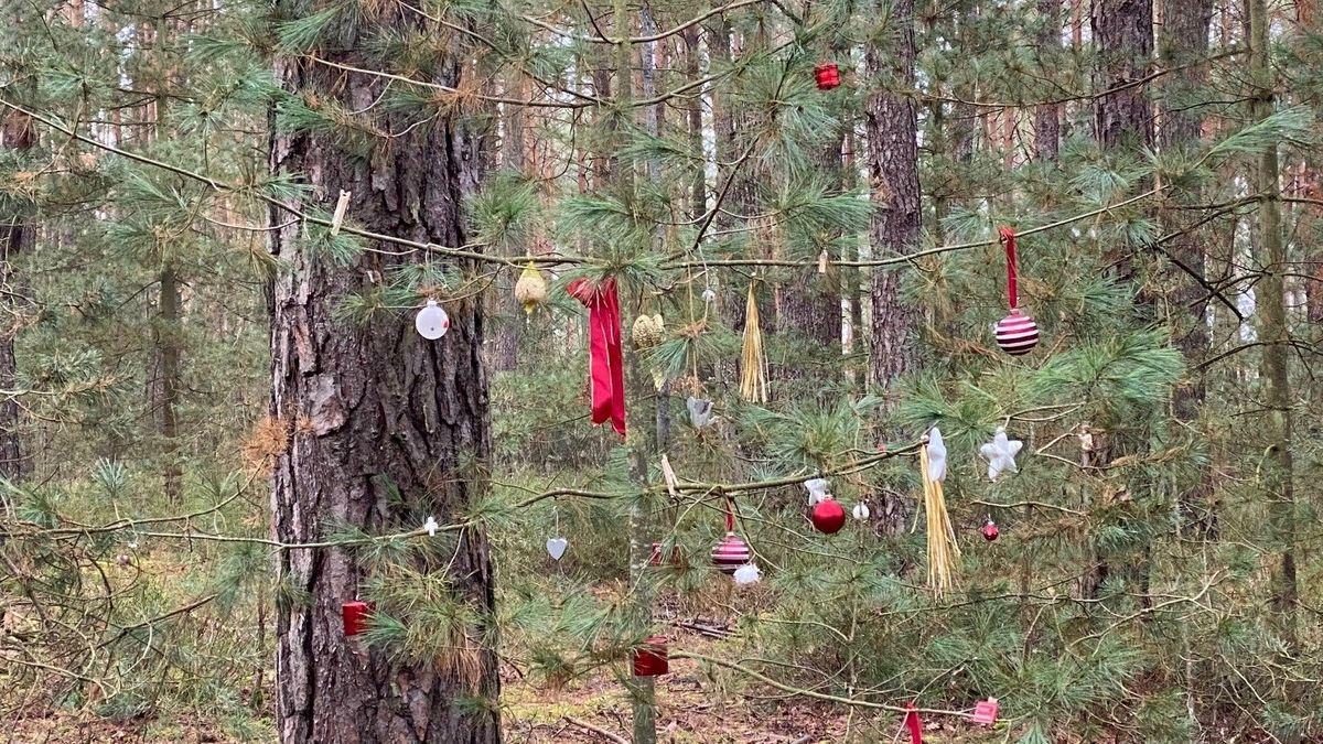 Weihnachtsschmuck am Baum mitten im Wald