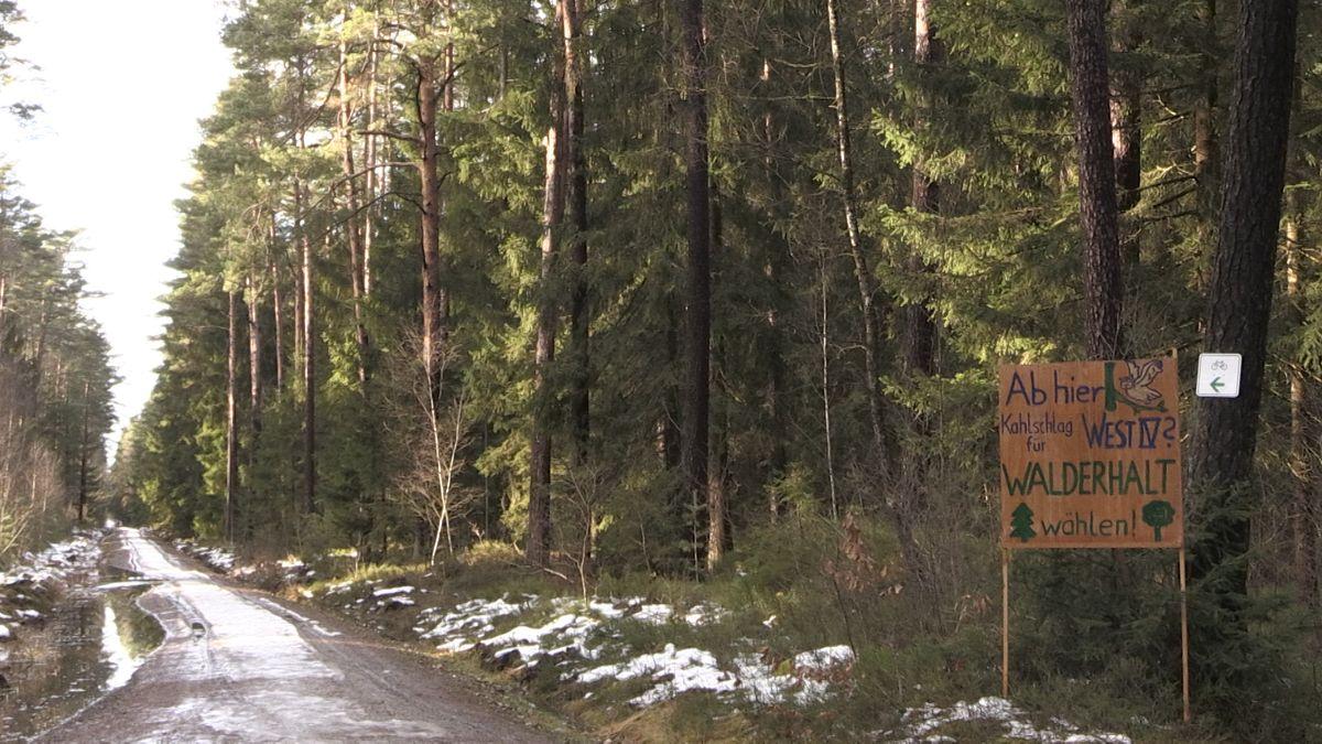 Waldstück, in dem das Gewerbegebiet hätte entstehen sollen