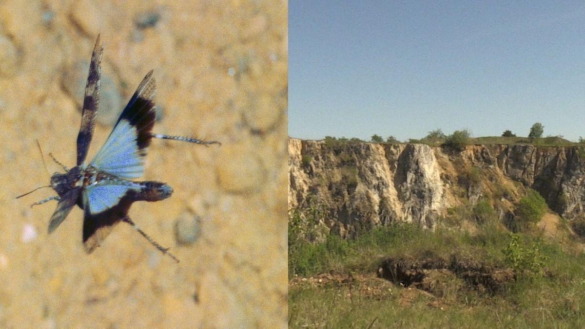 Früherer Steinbruch soll zum Naturparadies werden