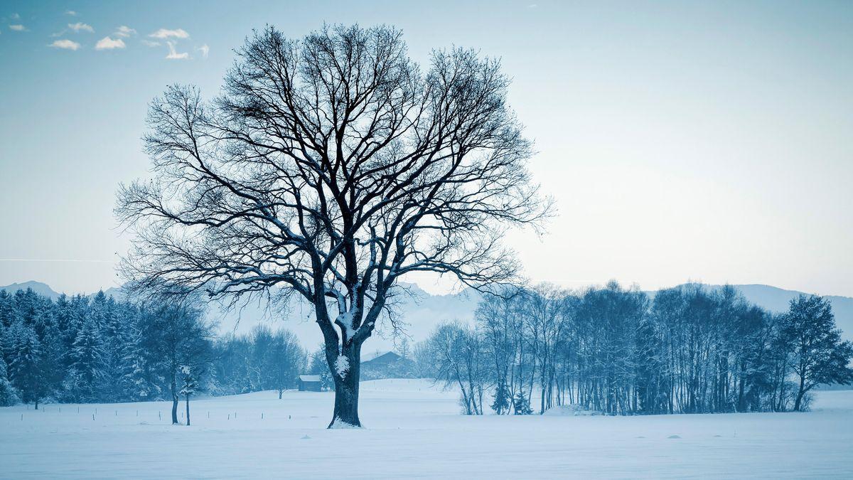 Eine leicht verschneite Winterlandschaft mit einem kahlen großen Baum im Vordergrund, dahinter mehrere Wäldchen