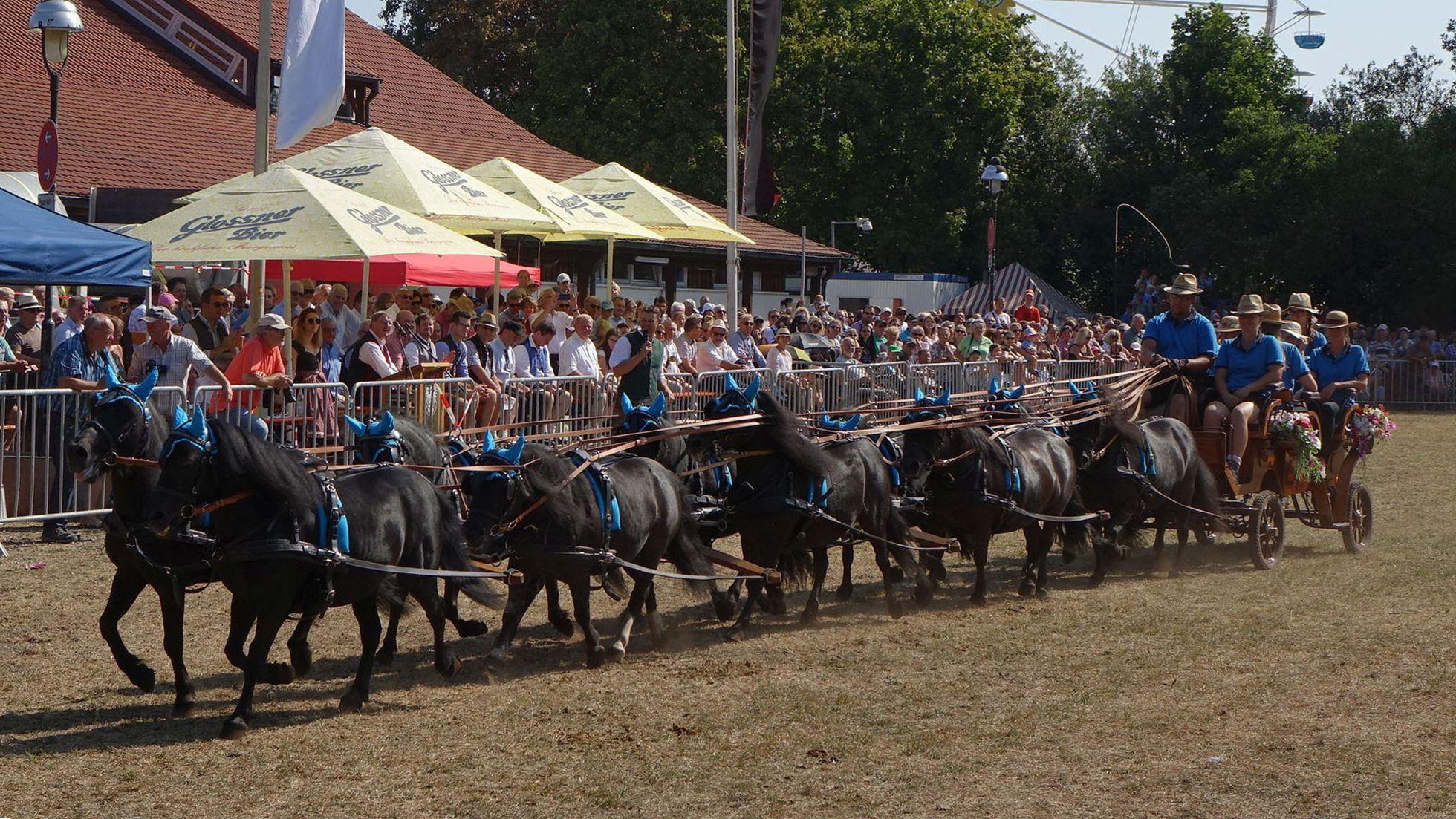 Gespann mit zehn Ponys