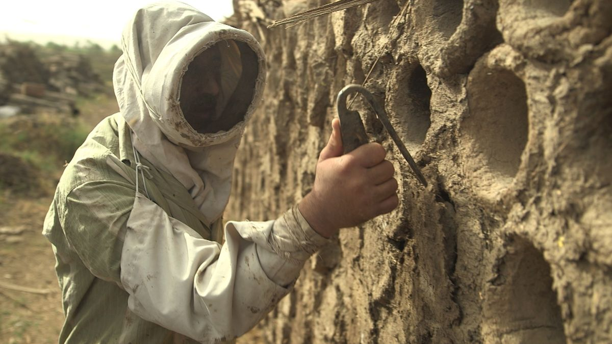 Imker in Ägypten vor Röhren aus Nilschlamm, den traditionellen Lamarckii-Bienenstöcken.