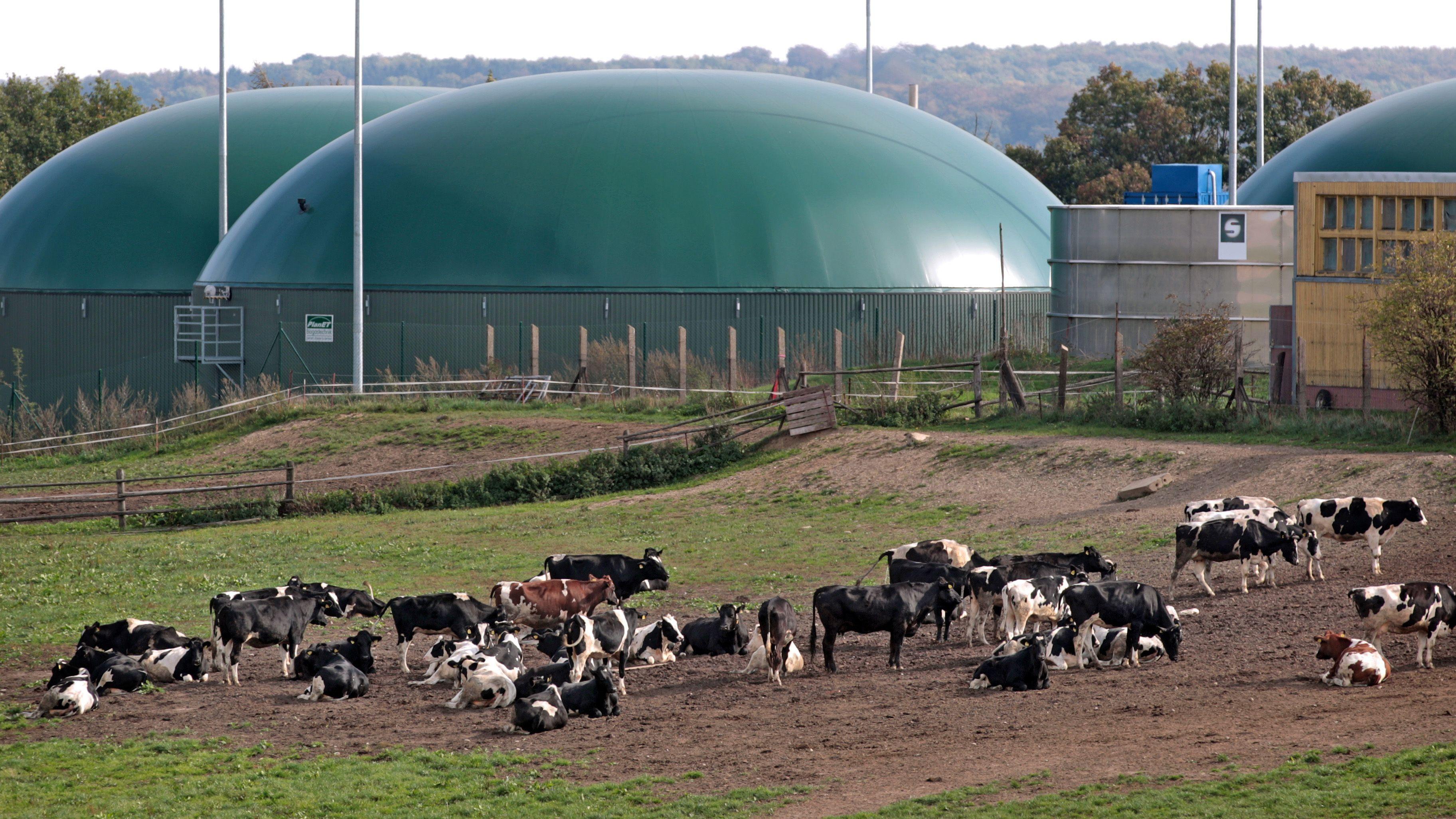 Biogas-Bauern fürchten um ihre Zukunft
