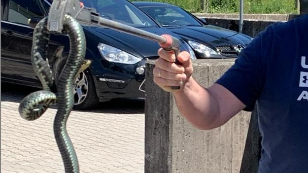 Eine Ringelnatter zu Besuch bei der Polizei in Simbach am Inn