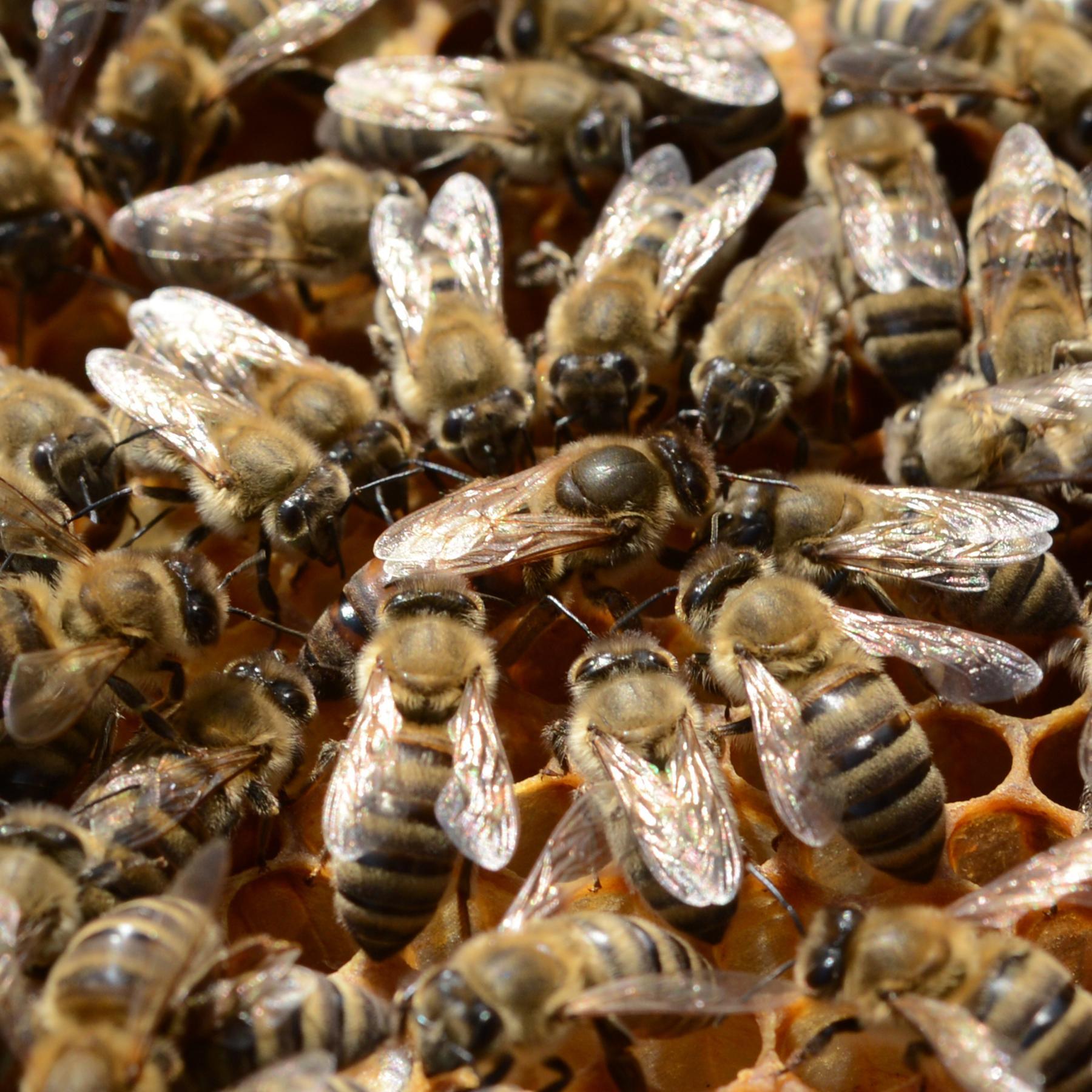 Monarchien im Tierreich - Königinnen ohne Zepter