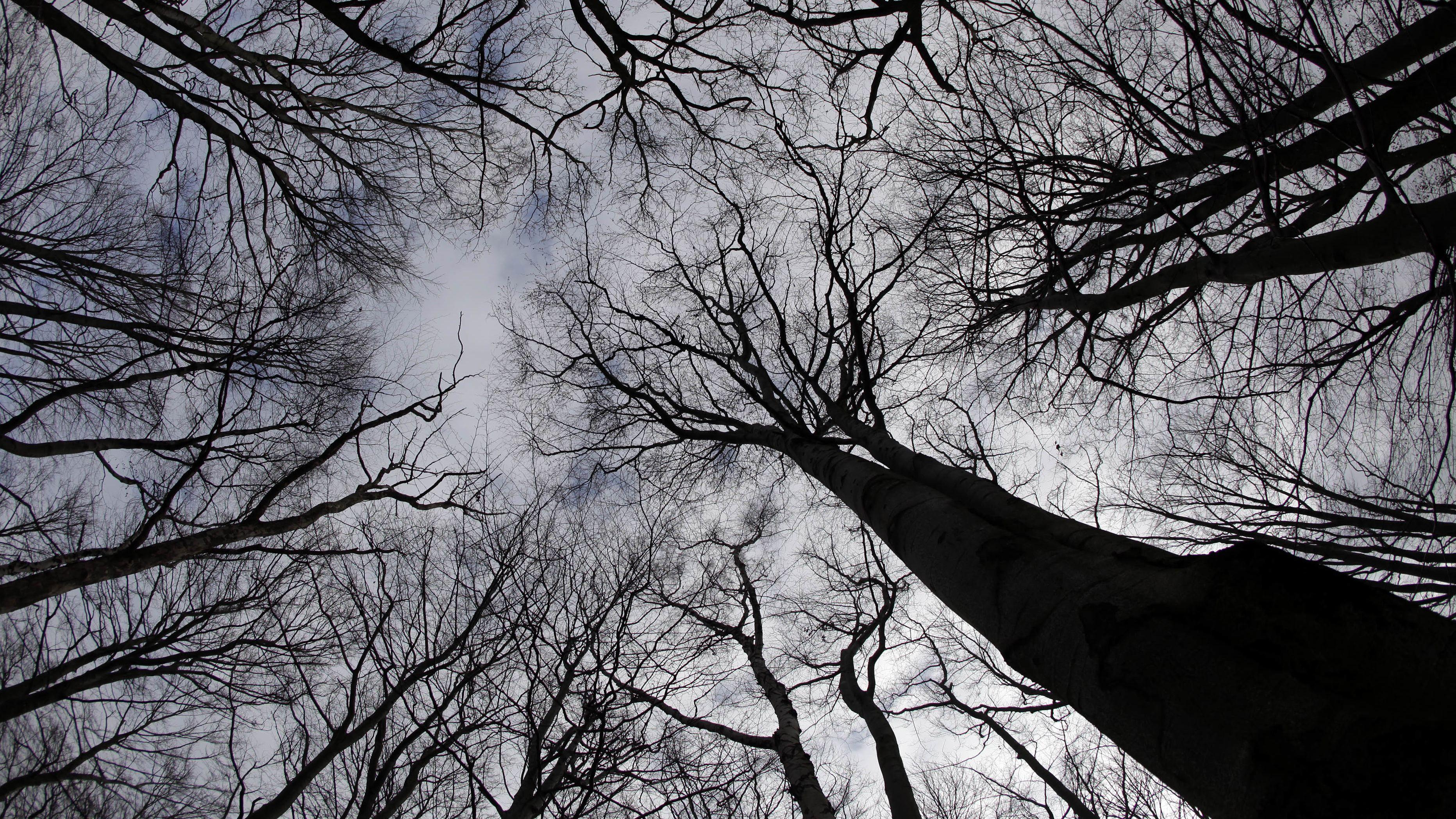 Wald im Winter, von unten fotografiert