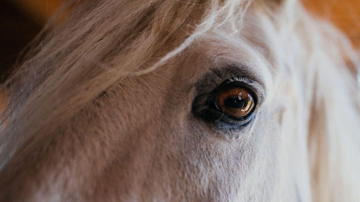 Nahaufnahme von einem Pferd