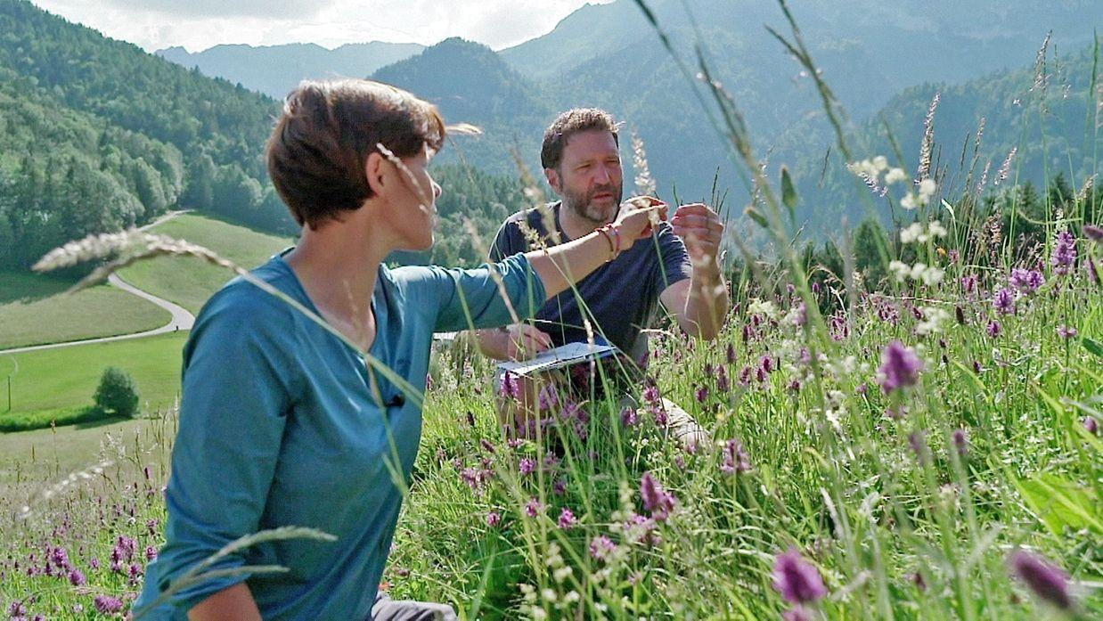 Almwiesen mit reichlichen Wildpflanzen