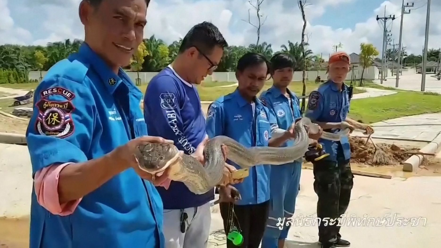 Wagemutige Einsatzkräfte haben im Süden Thailands eine mehr als vier Meter lange und 15 Kilo schwere Königskobra aus einem Kanalrohr gezogen. Mehr als eine Stunde hatte es gedauert, bis das Tier eingefangen war.