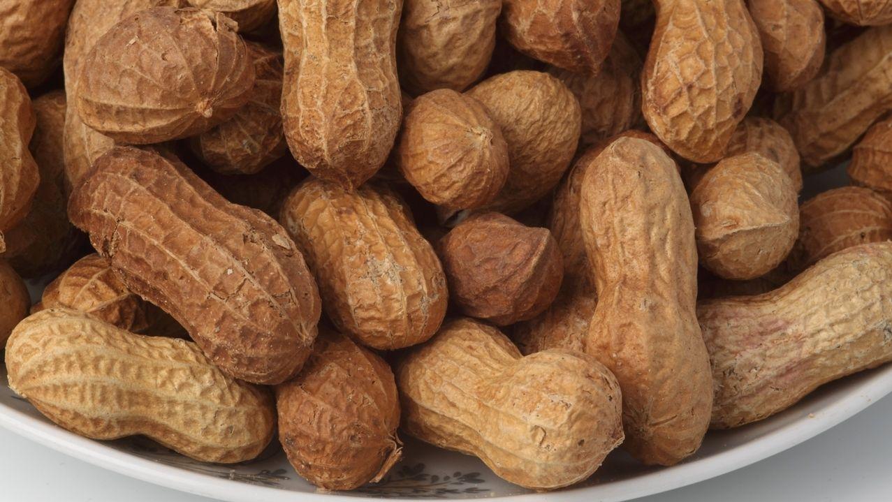 Erdnüsse sind für manche Menschen stark allergieauslösend. Eine Therapie gab es bislang nicht.