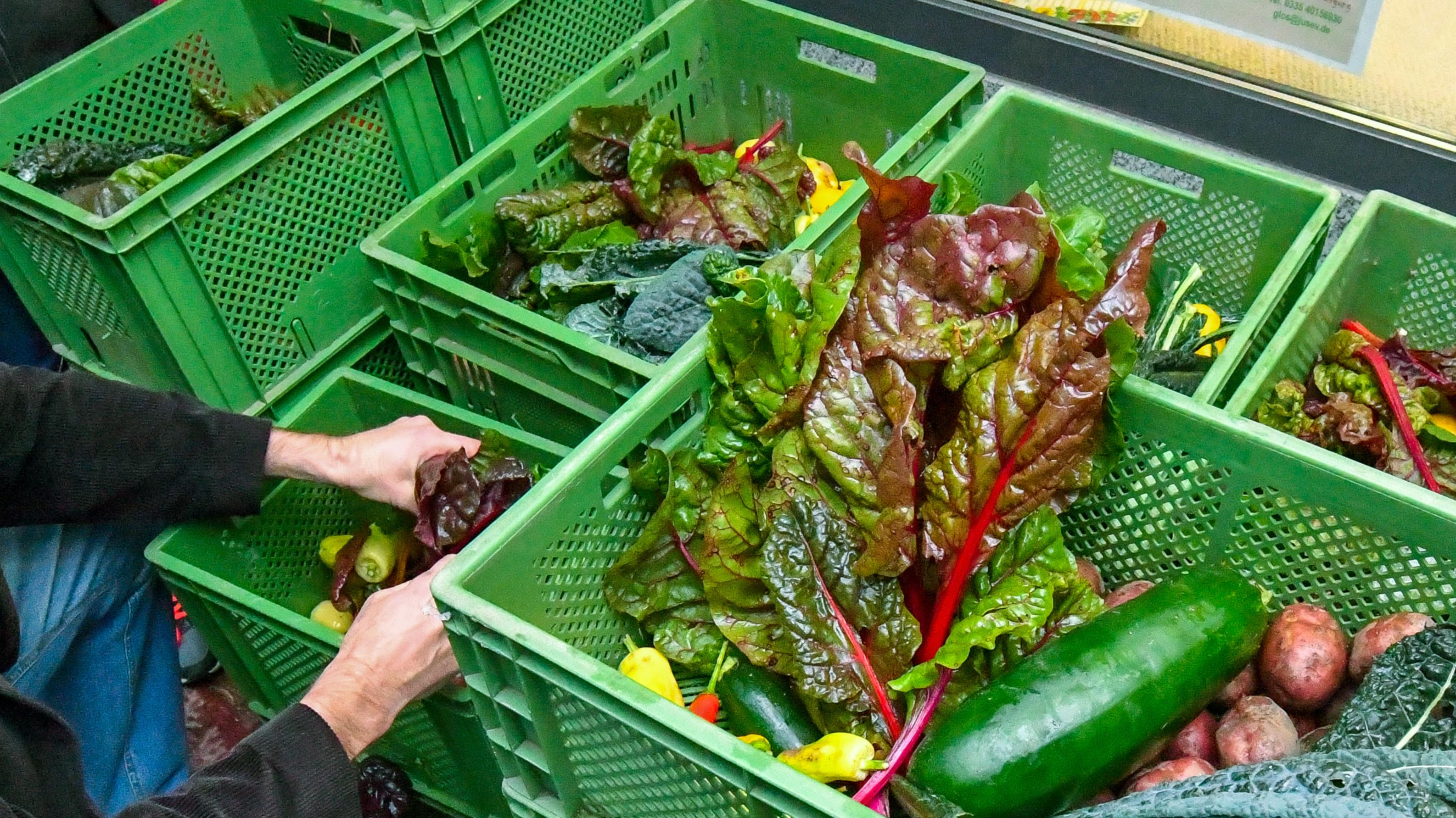 Grüne Gemüsekisten, hier mit Inhalt.