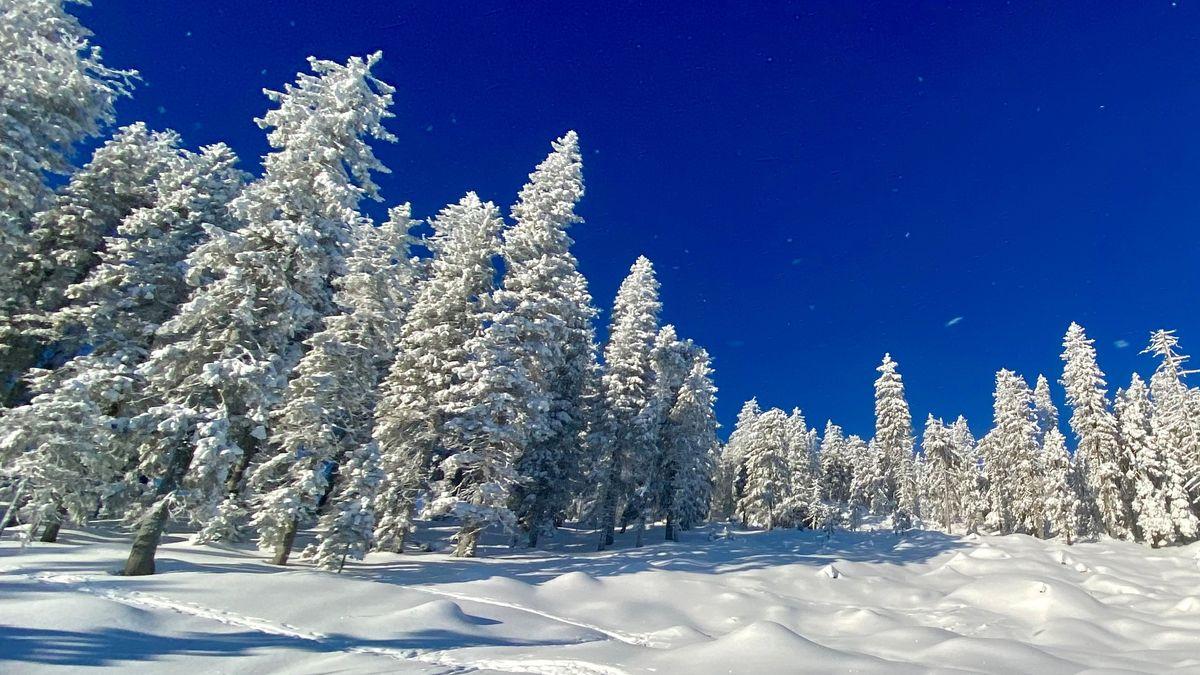 Verschneite Arber-Waldlandschaft im Corona-Winter