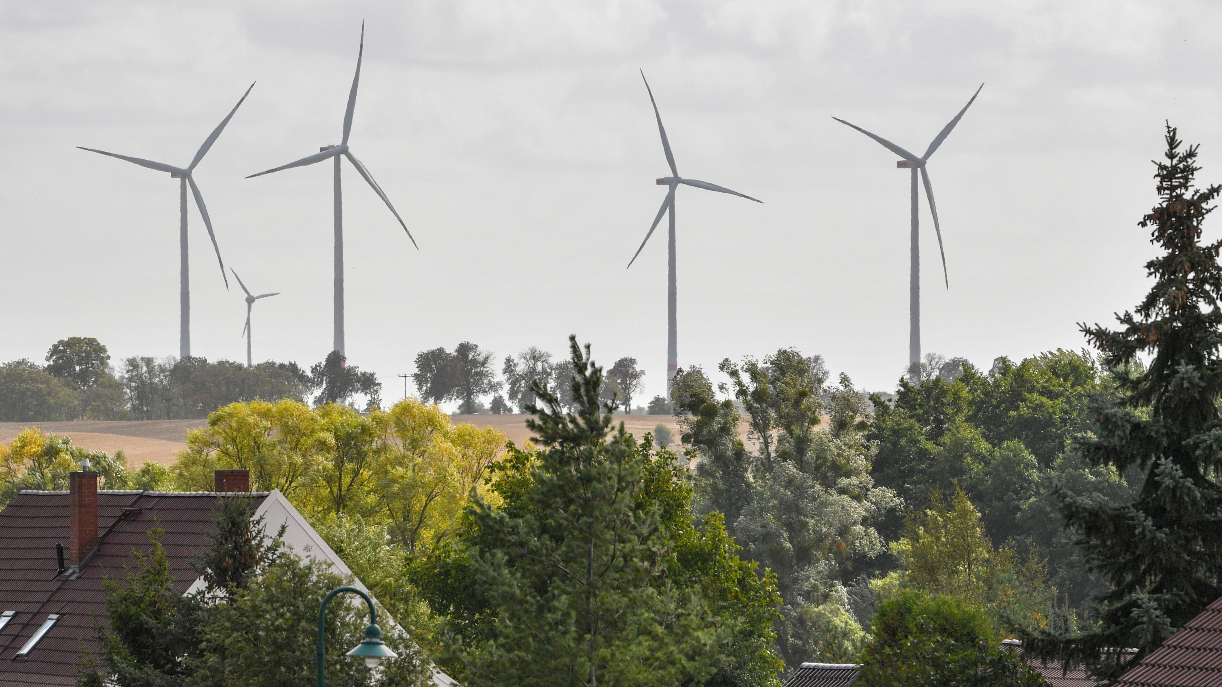 Wald oder Windkraft - Bürgerentscheid in Oerlenbach