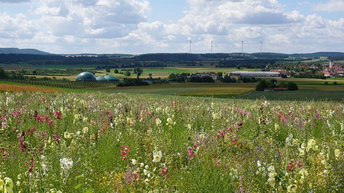 Blumenwiese für die Biogasanlage
