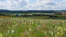 Blumenwiese für die Biogasanlage | Bild:Agrokraft GmbH