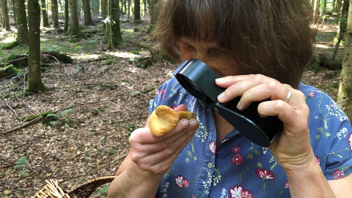Petra Buchfellner betrachtet einen Pfifferling mit der Lupe