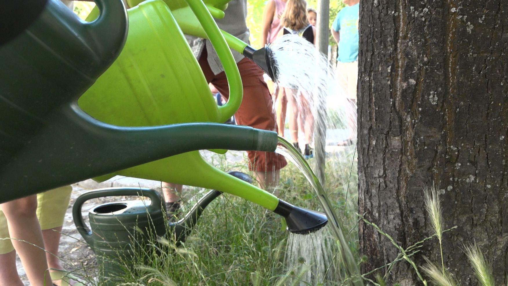 Anwohner zum Bäume gießen motivieren: Die Augsburger Baum-Allianz fordert mehr Einsatz fürs Grün am Straßenrand.