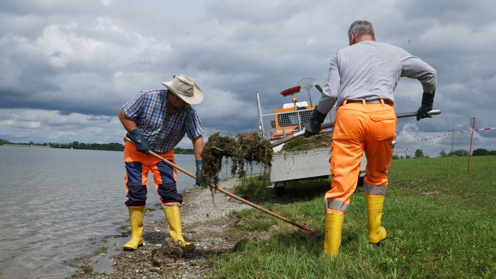 Am Ufer des Mandichosees werden Algen entfernt. | Bild:BR/Veronika Scheidl