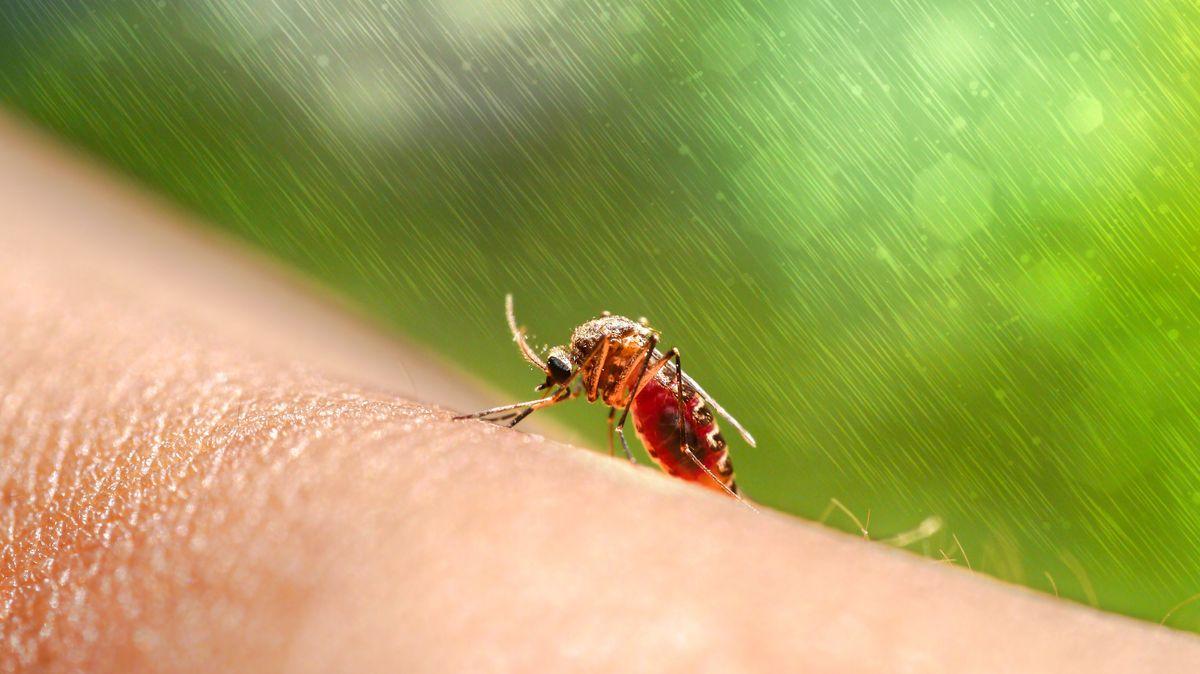 Ist Überträgerin des Malaria-Parasiten: die weibliche Anopheles Mücke (im Bild auf menschlicher Haut)
