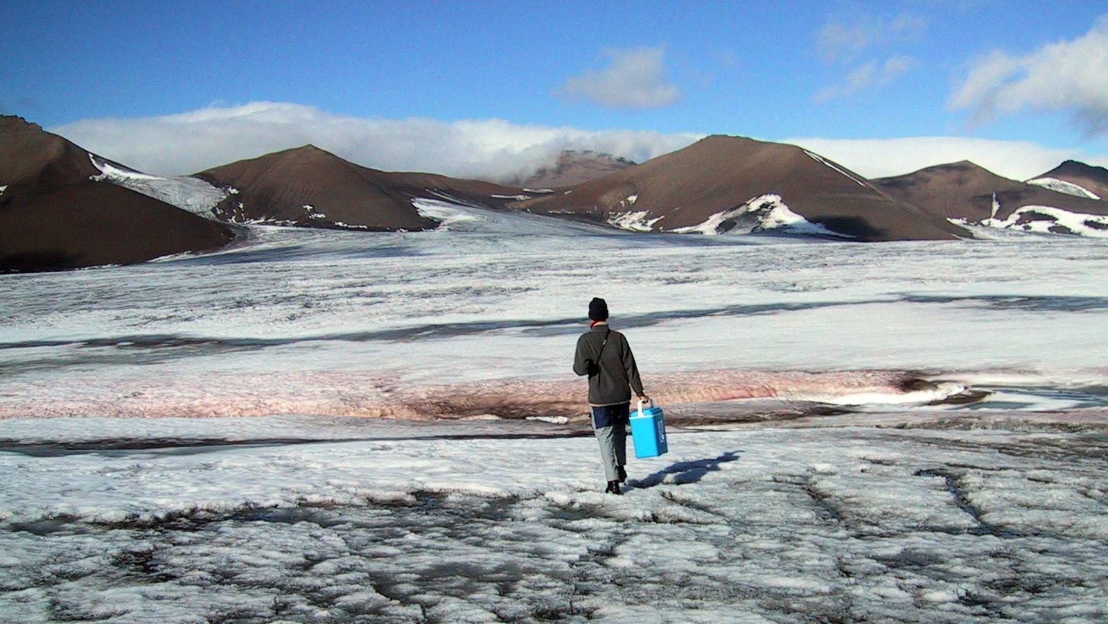 Alge des Jahres 2019: die blutrote Schneealge Chlamydomonas nivalis. Hier werden gerade auf dem Doktorbreen-Gletscher in Spitzbergen Proben der kälteliebenden Algen genommen.