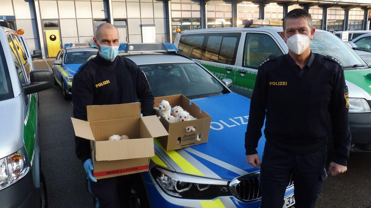 Polizei stoppt illegalen Welpentransport bei Wörnitz