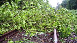 Ein umgestürzter Baum liegt auf einem Gleis (Symbolbild)   Bild:G. Czepluch