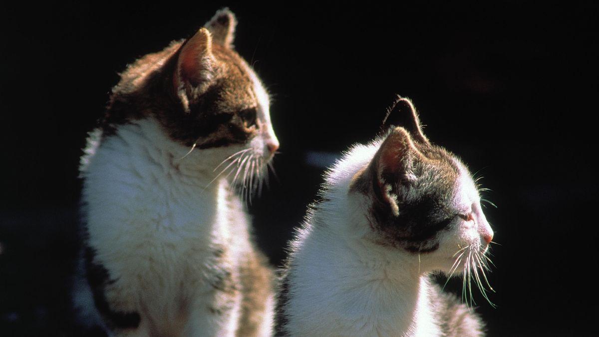 Mehrere Katzen im Raum Würzburg ausgesetzt