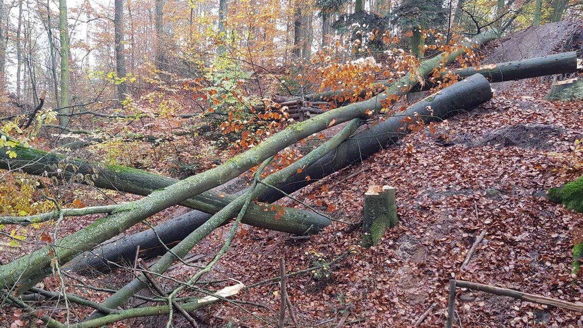 Gefällte Bäume liegen in einem Graben, rechts sind eine Mountainbikeabfahrt und daneben mehrere Aufgeschichtete Baumstämme zu erkennen.