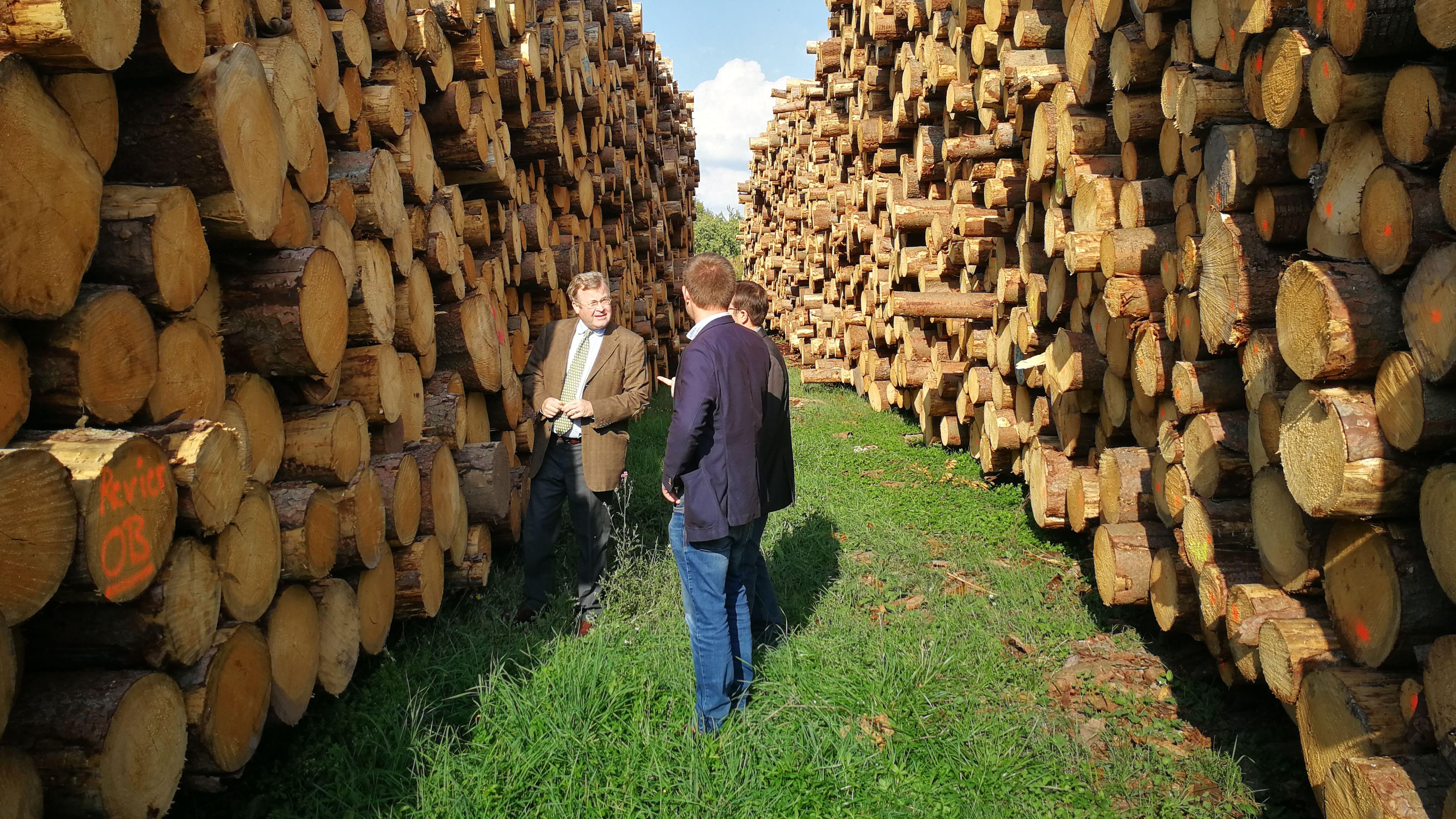 Waldbesitzer gibt Klimastudie für Castell in Auftrag