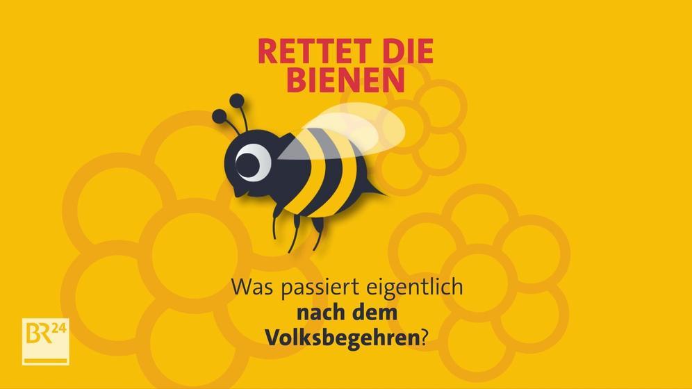 Rette die Bienen - Was passiert eigentlich nach dem Volksbegehren? | Bild:BR
