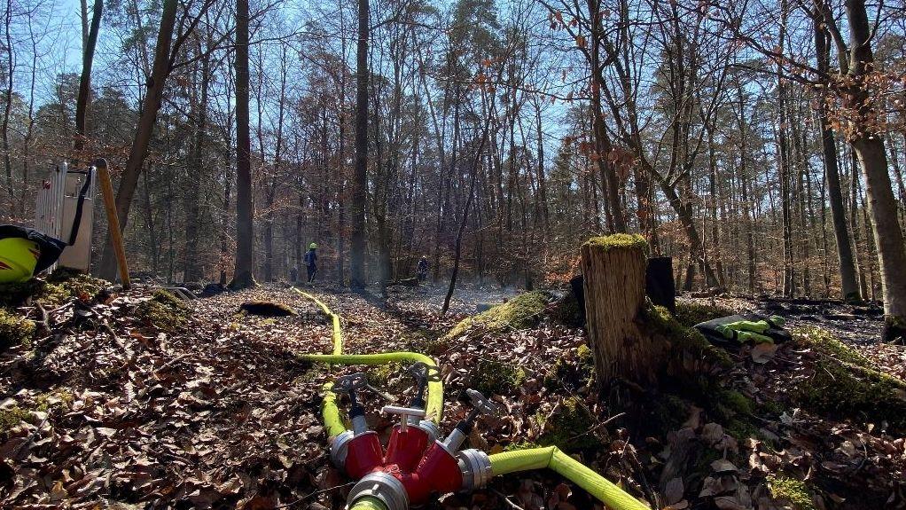 Einsatz der Feuerwehr in einem Waldstück bei Stockstadt.