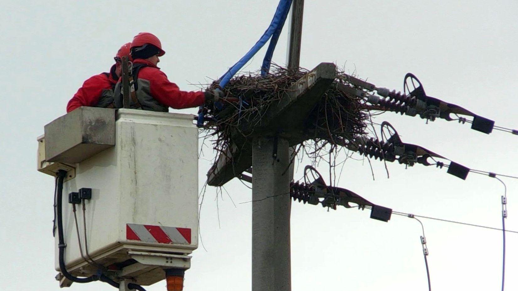 Mitarbeiter der N-Ergie siedeln das Storchennest um