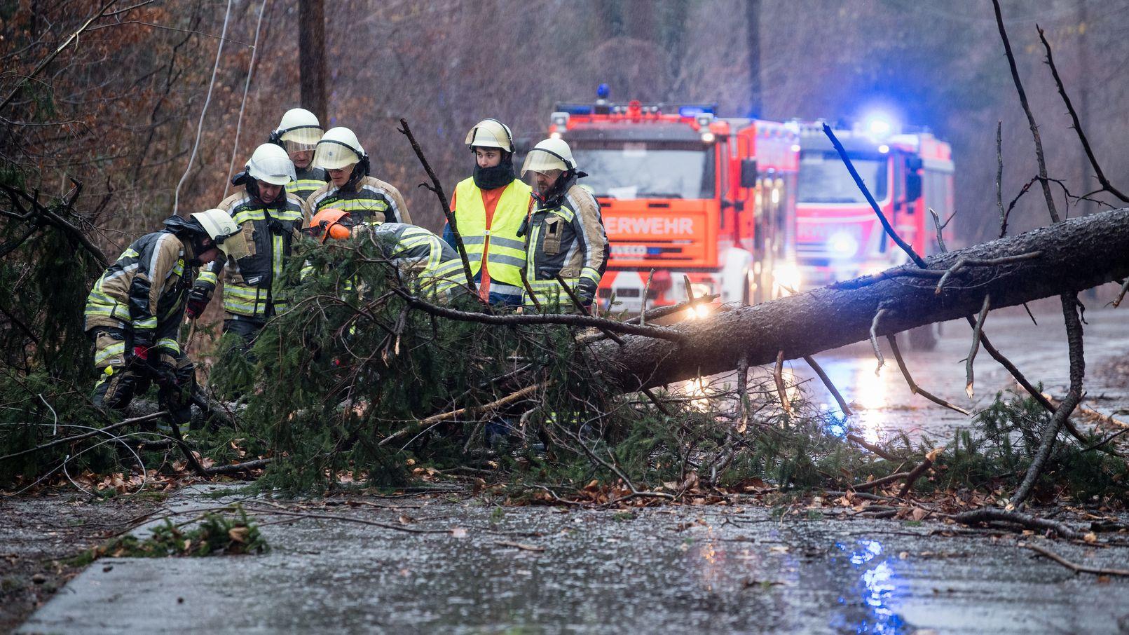 """Einsatzkräfte der Feuerwehr versuchen bei Pullach, einen durch das Sturmtief """"Sabine"""" umgestürzten Baum von einer Straße zu entfernen."""