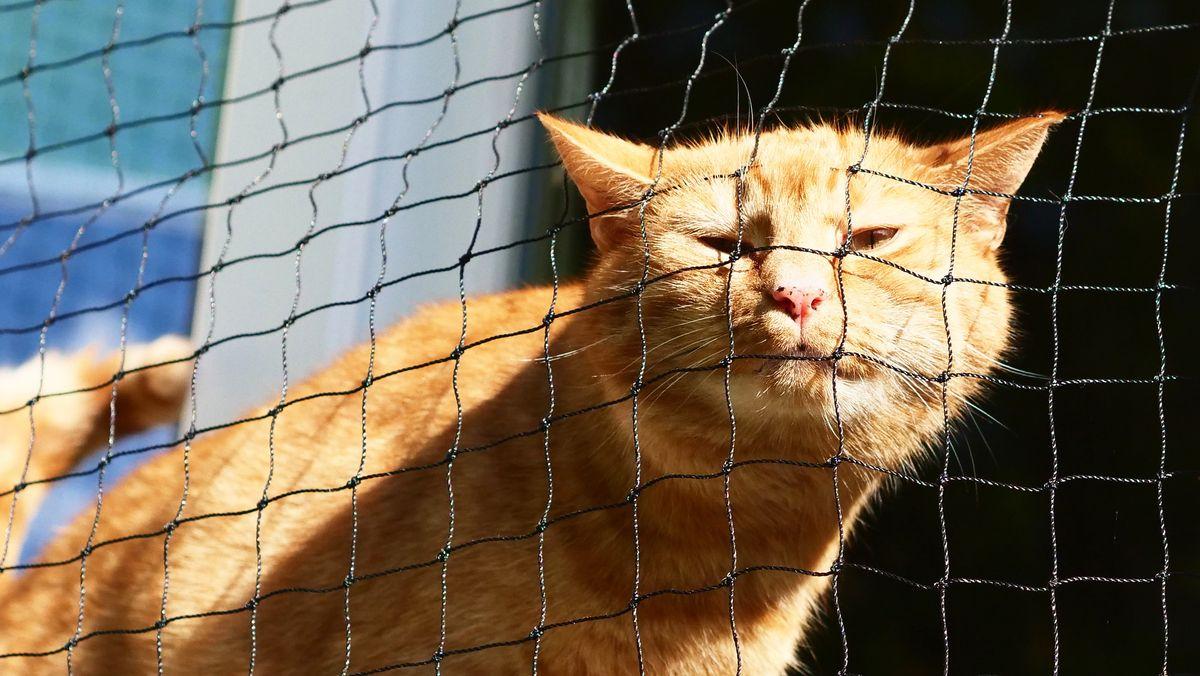 Eine Hauskatze in Quarantäne