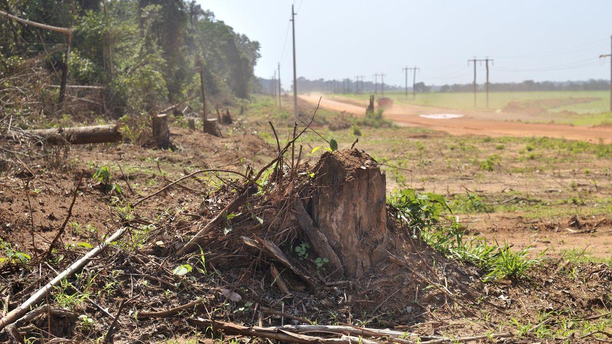 Abholzung des Amazonas-Regenwaldes für den Straßenbau in Brasilien.