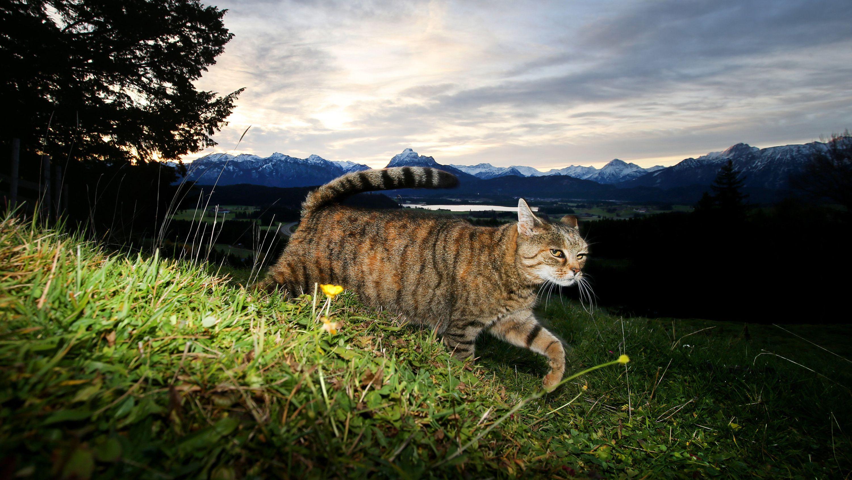 Archivbild: Streunende Katze / Juristen fordern Ausgehverbot für Katzen