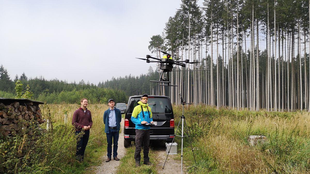Mit einer Flugdrohne wollen Wissenschaftler vom Borkenkäfer befallene Bäume künftig schneller erkennen.