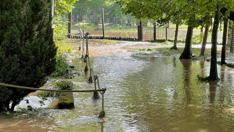 Gehwege und Gehege im Wildpark Schloss Tambach sind nach schweren Regenfällen in der Nacht überschwemmt.