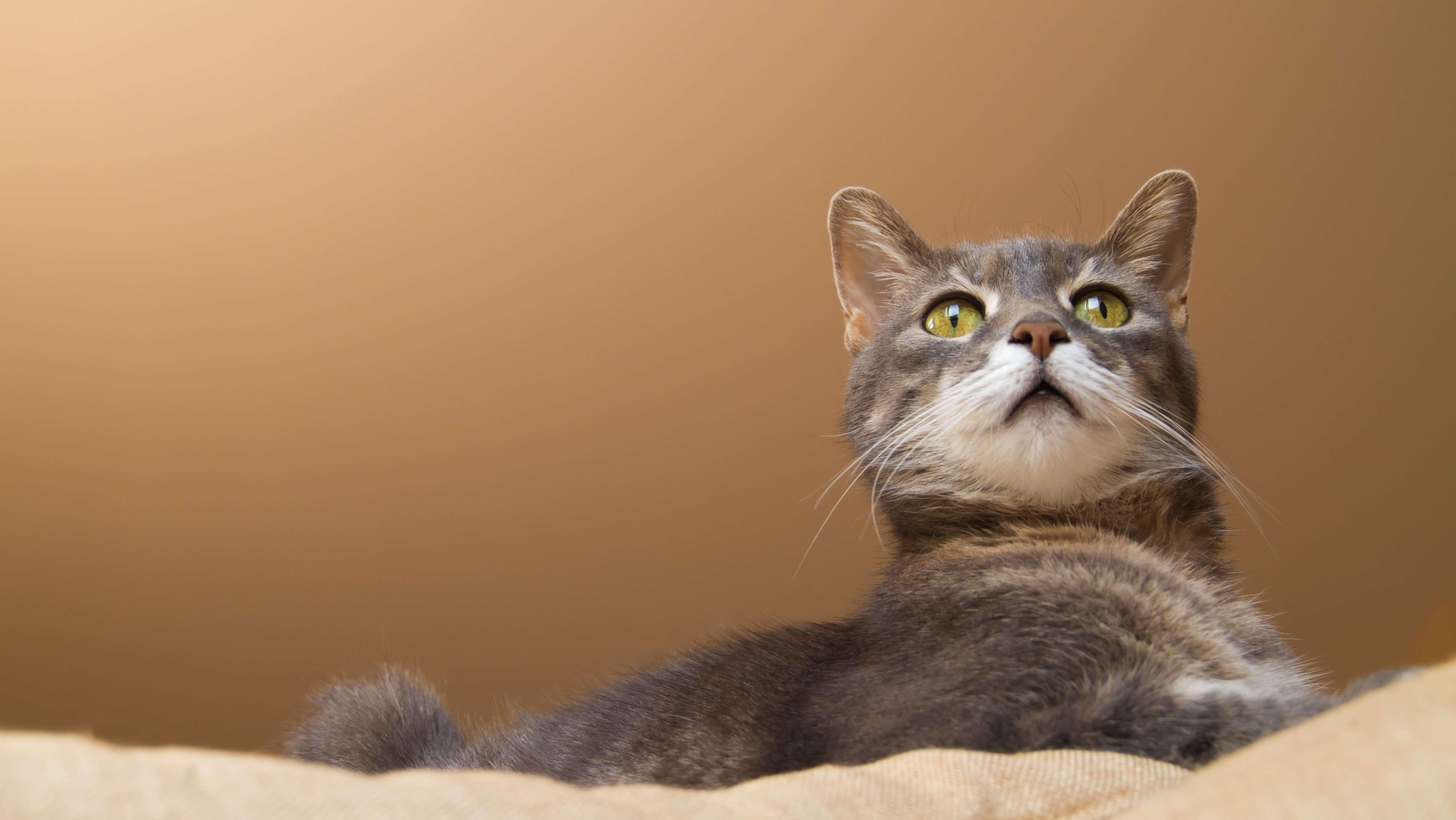 Jetzt beweist es eine Studie: Katzen verstehen und reagieren tatsächlich auf ihren Namen.