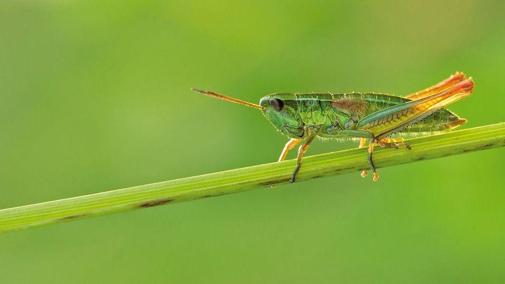 Studie zum Insektensterben