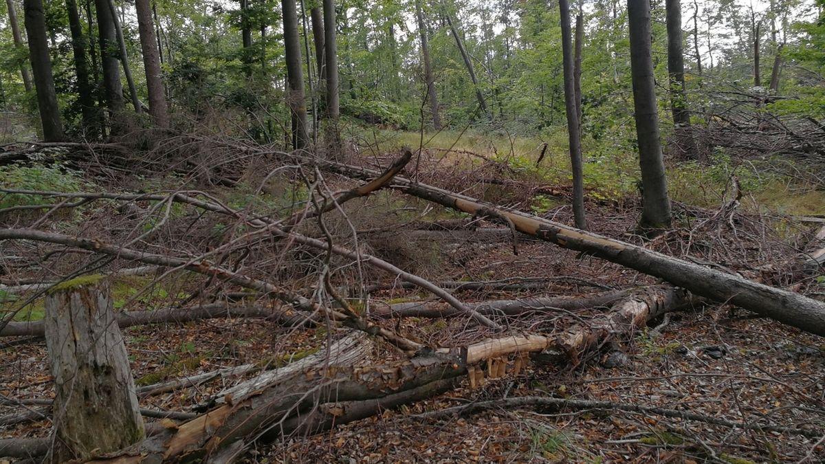 Totholz im Wald bei Rauhenebrach