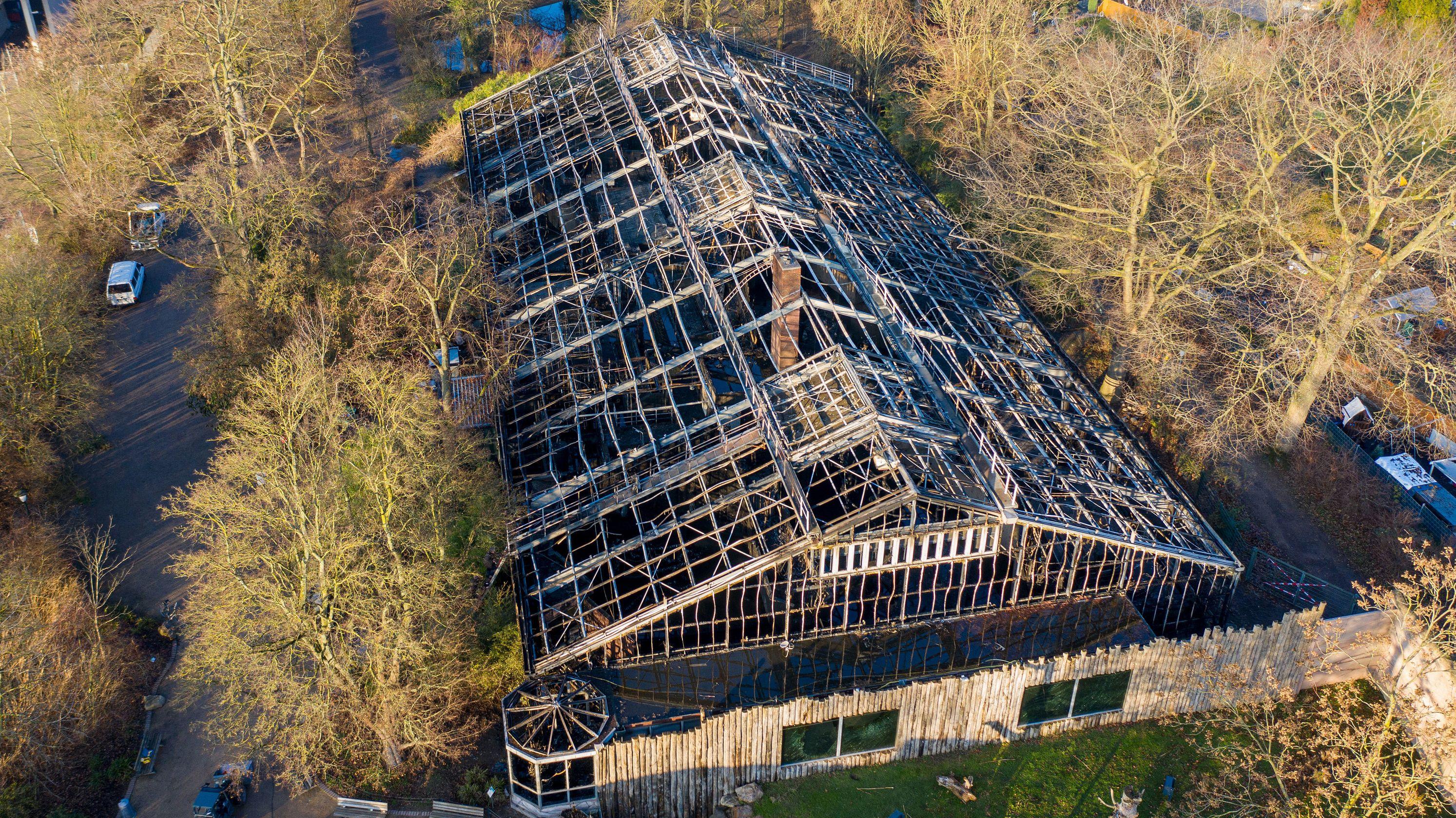 Das abgebrannte Affenhaus ist nach dem Brand in der Silvesternacht im Krefelder Zoo zu sehen.