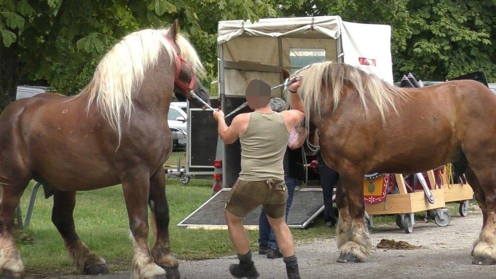 Dieses Bild aus dem Video der Tierschützer soll zeigen, wie am Rande der Veranstaltung in Neumarkt ein Pferd geschlagen wird   Bild:Aktionsgruppe Tierrechte Bayern