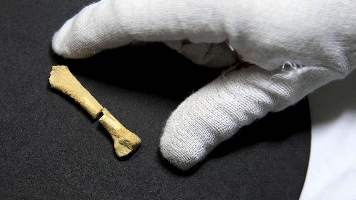 Ein Fußknochen, der in der Callao-Höhle im Norden der Philippinen entdeckt wurde. Er ist 61 Millimeter und mindestens 67.000 Jahre alt.