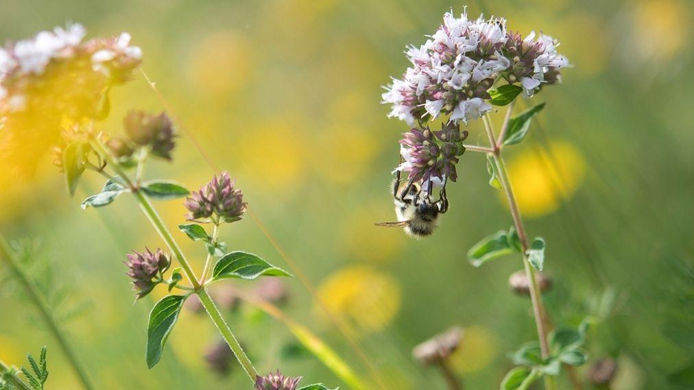 Insekten auf der Wiese